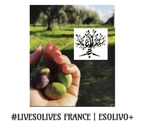 Apadrina Un Olivo en Francia